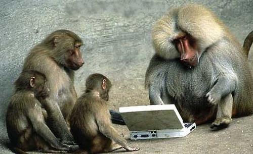 Funny baboon photos2 (1)